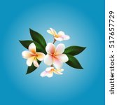 plumeria. vector flower | Shutterstock .eps vector #517657729