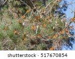 Monarch Butterflies Spending...