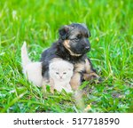 Stock photo german shepherd puppy hugging kitten on green grass 517718590