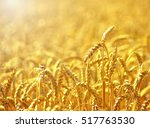 fields of wheat at the end of... | Shutterstock . vector #517763530