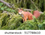 friendly squirrel smiling on... | Shutterstock . vector #517788610