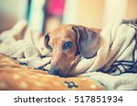 Portrait Of Small Dog Lying On...