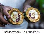 Fresh Cocoa Fruit In Farmers...