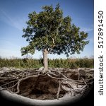 tree with roots and burrow   Shutterstock . vector #517891450