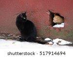 Two Homeless Cat. Ginger Cat...