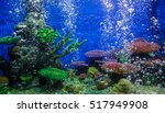 A Marine Aquarium With Fishes...