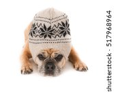 Pug Dog With Woolly Hat On...