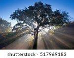 Rays Of Morning Sun Shining...