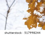 Yellow Leaves In Frost And...