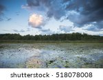Lily Pads Floating On A Pond...