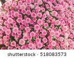 pink flower garden background | Shutterstock . vector #518083573