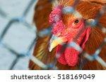 chicken behind blurry wire fence | Shutterstock . vector #518169049