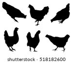 Chicken silhouettes, collection on the white background