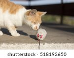 Stock photo kitty playing outdoor with toy mouse 518192650