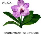 Vector Orchid Flower With Gree...