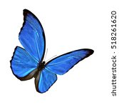 Blue Morpho Butterfly ...