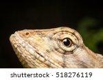 Chameleon Head Macro In Nature...