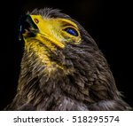 Color Portrait Of A Hawk With...