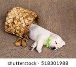 Labrador Puppy Sleeping In A...