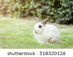 Stock photo nd rabbit or cute bunny on green grass 518320126