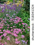 Small photo of Close up an attractive and colourful flower border with Achillea millefolium Pink Grapefruit and Veronica Purpleicious