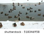 winter outdoor duck pond city | Shutterstock . vector #518346958