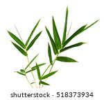 dried bud green of bamboo leaves | Shutterstock . vector #518373934
