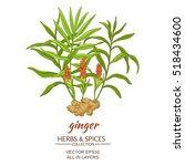 ginger vector illustration | Shutterstock .eps vector #518434600
