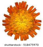 Very Large Orange Hawkweed...