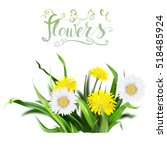 dandelion  green grass  yellow... | Shutterstock .eps vector #518485924