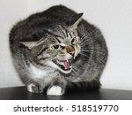 Gray Striped Scared Evil Cat...