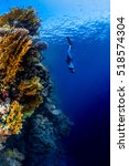 freediver descending along the... | Shutterstock . vector #518574304