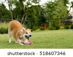 Stock photo happy dog playing at the park with toy 518607346
