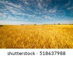 Field Of Golden Wheat Under Th...