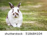 Stock photo nd rabbit or cute bunny on green grass 518684104