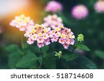 blurred image of morning... | Shutterstock . vector #518714608