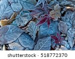 Frosty Autumn Fall Leaves....