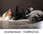 Cute Cat And Dog Sleep Huddled...