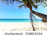 Palm Tree Leaf  Swing On A...