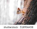 macro outdoor scene of red... | Shutterstock . vector #518906458