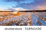 Rural Field With Cut Grass  A...