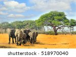 herd of elephants walking from... | Shutterstock . vector #518970040