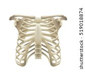 rib cage isolated on white... | Shutterstock .eps vector #519018874