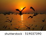 at dawn sea gulls fly around as ... | Shutterstock . vector #519037390