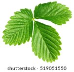 Single Green Strawberry Leaf...