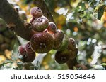 fig | Shutterstock . vector #519054646