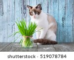 Beautiful Cat With Feline Gras...