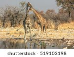 Two Giraffes Reflecting In The...