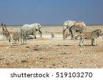 Wildlife  Zebras Elephants...