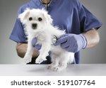 veterinarian doctor examining a ... | Shutterstock . vector #519107764